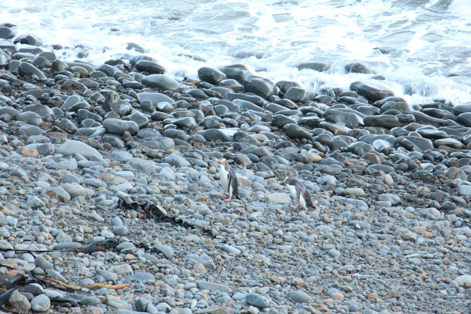 Penguins in beach