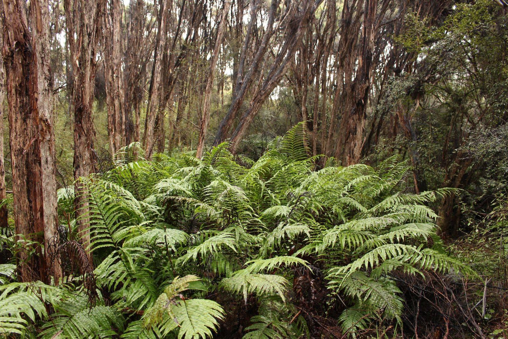 bush walk Lenz