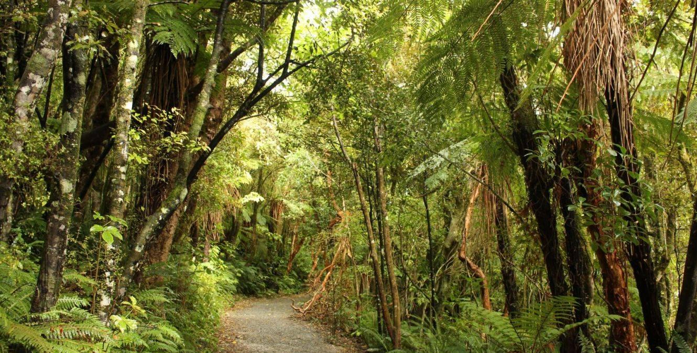 Tautuku bush walk The Catlins